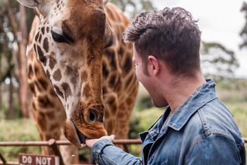 Half Day excursion to David Sheldrick and Giraffe center
