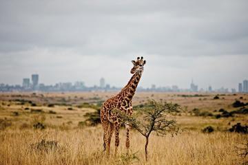 Nairobi National Park Safari