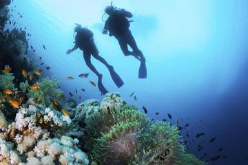 Experiencia de submarinismo para principiantes en Lanzarote