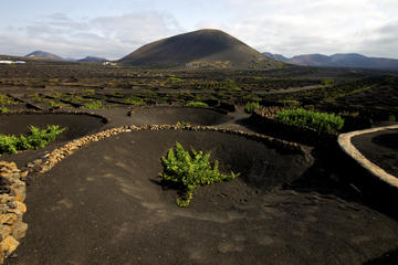 Timanfaya and Playa Blanca Day Trip