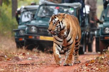 Private 07-Days Golden Triangle Tour with Ranthambhore Tiger Reserve...