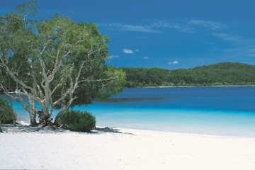 Excursion de 2jours en 4x4 à l'île Fraser au départ de Brisbane ou...