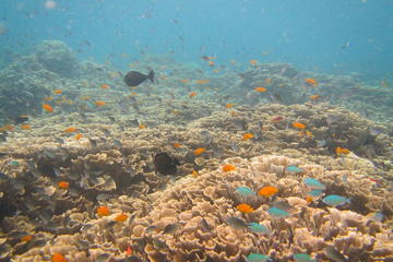 Discover Scuba Diving in Amed