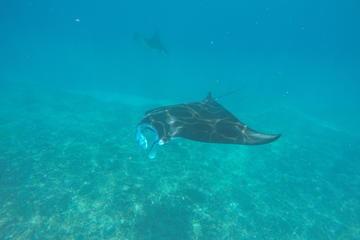 Discover Scuba Diving in Nusa Penida - Manta Point