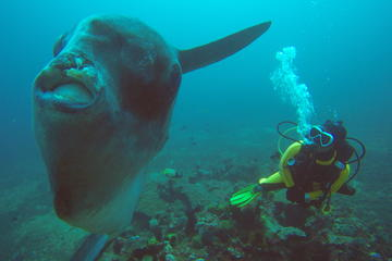 Scuba Diving in Gili Biaha
