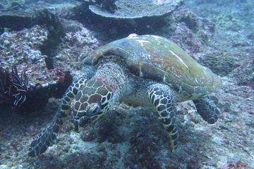 Scuba Diving in Padang Bai