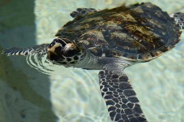 Turtle Encounter Day Cruise to Beachcomber Island