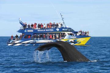 Avistamiento de ballenas por TUK TUK...
