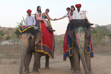Elephant Activity in Jaipur
