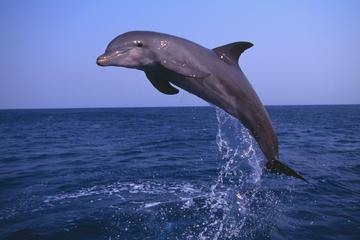 Delfinbeobachtungs- und...