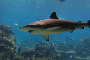 plongee-aves-les-requins-grand-bahama
