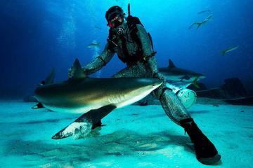 Plongée avec les requins à Grand Bahama