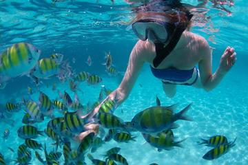Snorkeling à Freeport et croisière en...