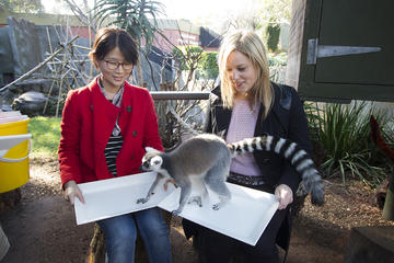 Adelaide Zoo Behind the Scenes Experience: Lemur Feeding