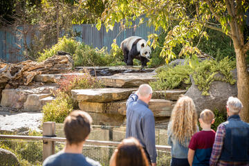 Panda and Friends tour and a day at Adelaide Zoo
