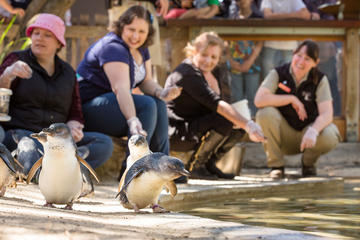 Penguins in person interactive and a day at Adelaide Zoo