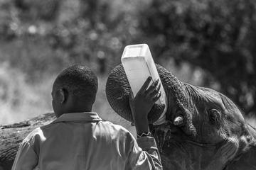 Excursión Absoluta del día de Nairobi
