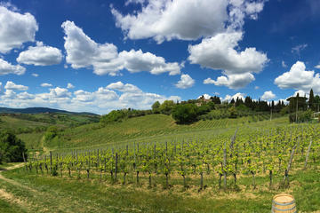 Educational Wine Tour & Tasting in Siena