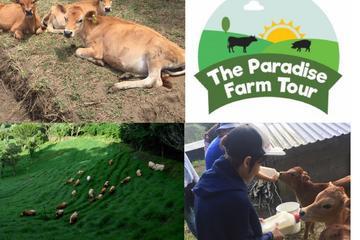 The Paradise Farm Tour & Organic Lunch