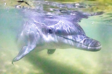 Premium Dolphin Feeding Day Cruise to Tangalooma Island Resort on Moreton Island