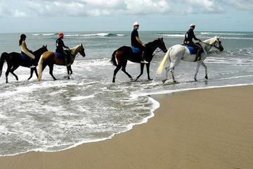 Hesteridning og Ubud opplevelse