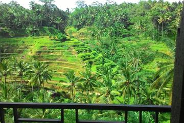 Monkey Forest, Ubud, Rice terrace