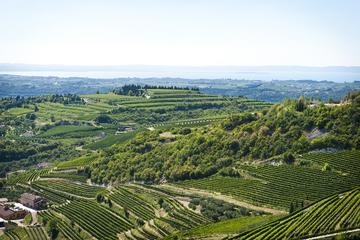 Amarone Wine Trail Tour from Verona