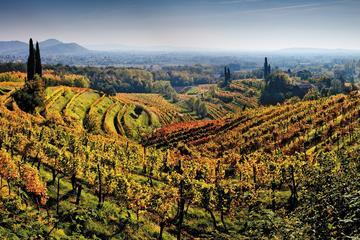 Friuli Venezia Giulia Insiders Wine Tour
