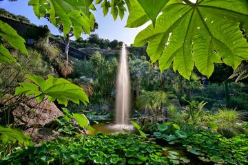 Coach Tour of Ischia and La Mortella Botanic Gardens from Sorrento