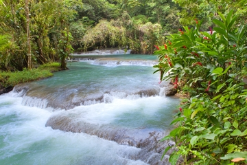 Excursion sur la côte de Montego Bay : les chutes de Dunn