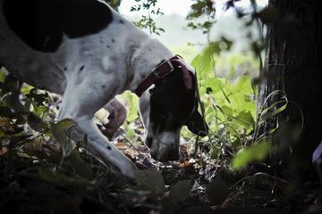 Excursion privée: initiation à la chasse aux truffes au départ de...