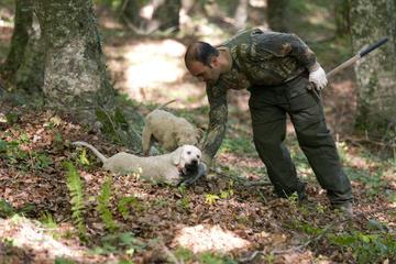 Tour privato: Esperienza di caccia al tartufo da Napoli con Pranzo