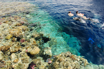 Excursión de un día para practicar buceo de superficie en Egipto...