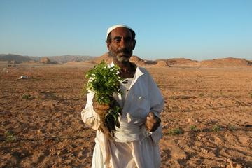 Experiencia agrícola egipcia de día completo desde Sharm el Sheij