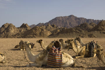 Sinai Desert Camel Day Trek to Matamir and Nawamis including Bedouin...
