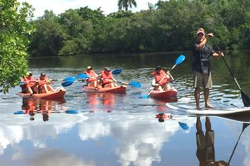 Book Naples Kayak Mangrove Tour on Viator