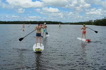 Day Trip Paddleboard Back Water Mangrove Tour near Naples, Florida