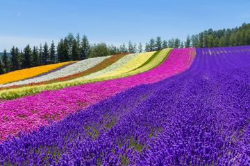 Furano and Biei Private Day Tour (Up to 13 Passengers)
