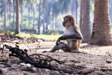 Can Gio Biosphere Reserve Day Trip from Ho Chi Minh City