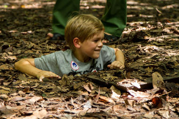 Half Day Cu Chi Tunnels Tour from Ho...