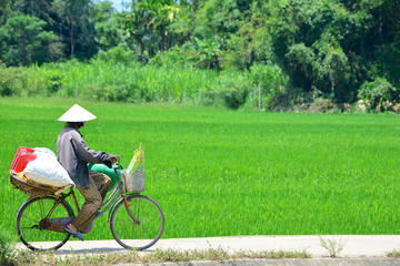 Half-day Cycling Hoi An Countryside