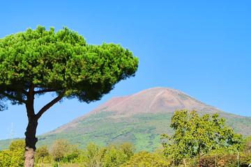 Tour del Vesuvio con partenza da Sorrento