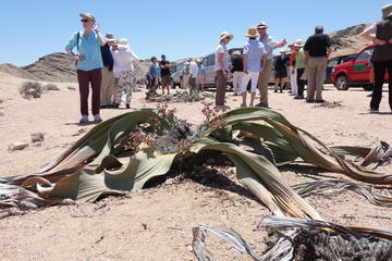 Moon Land Vally and Welwitschia...