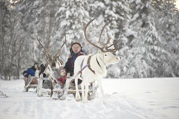 Forest Trail Reindeer Safari