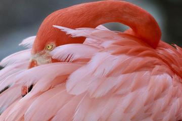 Entrada a Flamingo Gardens en Fort Lauderdale con viaje en tranvía...