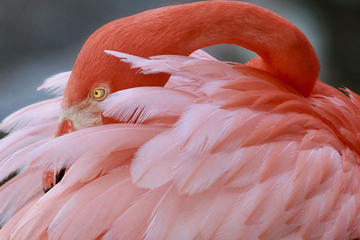 General Admission to Flamingo Gardens Admission