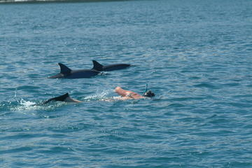 Dolphin Swim and Bénitiers Island Day Trip