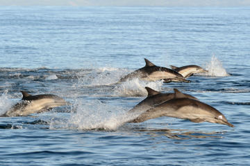 Dolphin Swim and Bénitiers Island Day...