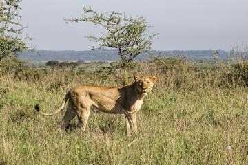 1 Day Nairobi Tour with Park, Elephant Orphanage Giraffe Center& Bomas of Kenya  Tour