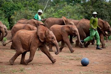 Half Day  Trip David Sheldrick Elephant Orphanage and Giraffe Center Tour From  Nairobi